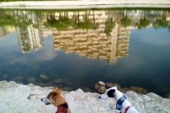 020.Aura, Totti y Sandra. De dónde salen tantos patos